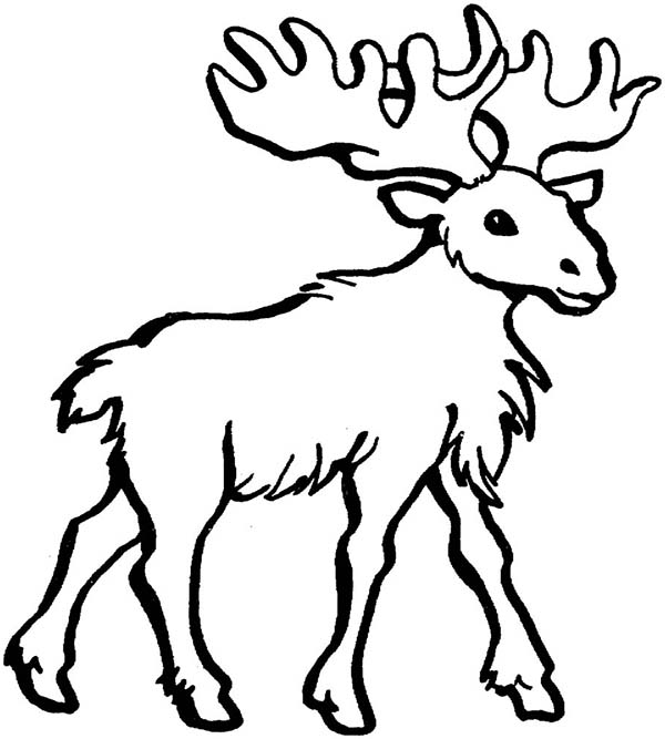 Moose, : Moose with a Lot of Hair Coloring Page