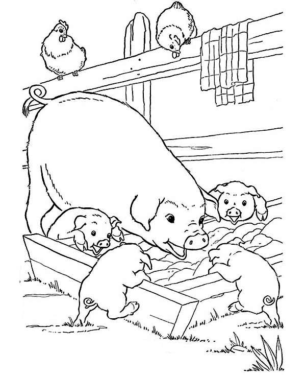 Farm Animal, : Mother Pig and Her Babies are Eating on Farm Animal Coloring Page
