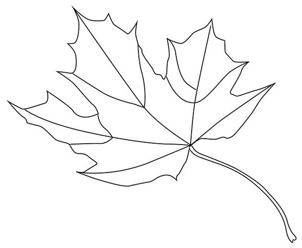 Maple Leaf, : Norway Maple Leaf Coloring Page