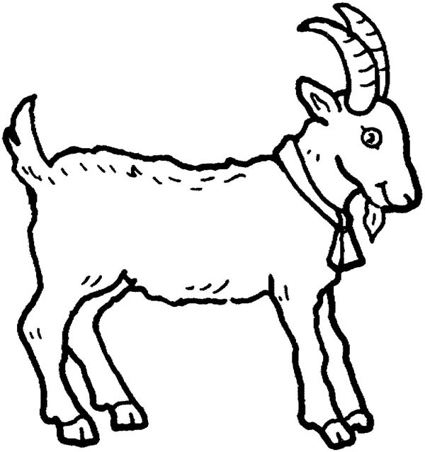 Farm Animal, : Picture of a Goat in Farm Animal Coloring Page