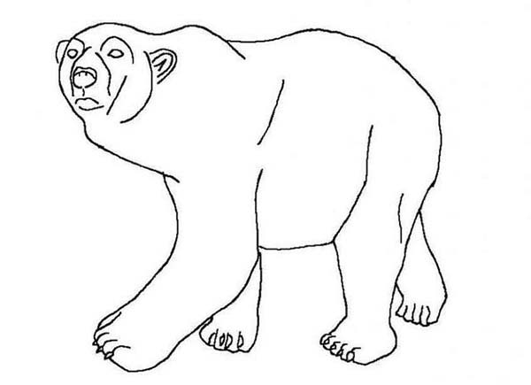 Arctic Animals, : Polar Bear Arctic Animals Coloring Page for Kids
