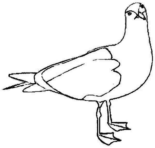 Seagull, : Pose of a Seagull Coloring Page