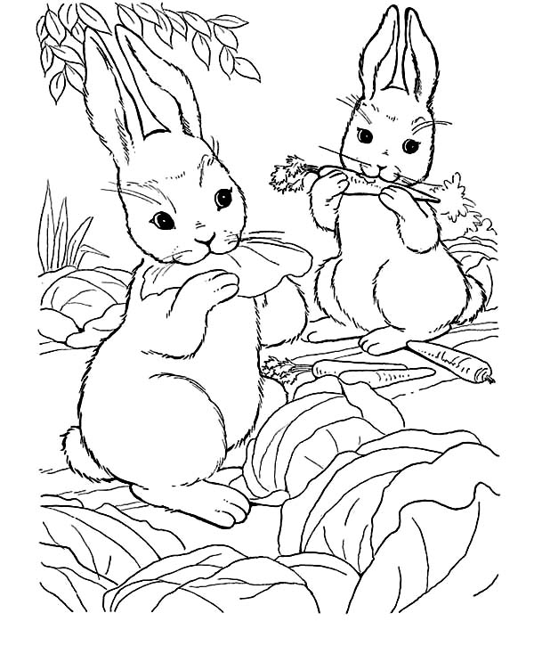Farm Animal, : Rabbits Eating Carrot on Farm Animal Coloring Page