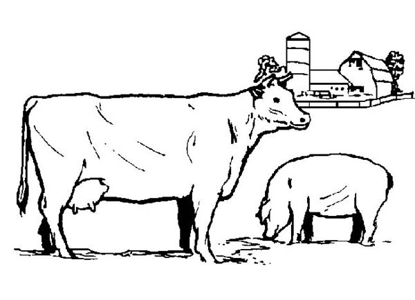 Farm Animal, : Realistic Farm Animal Picture Coloring Page