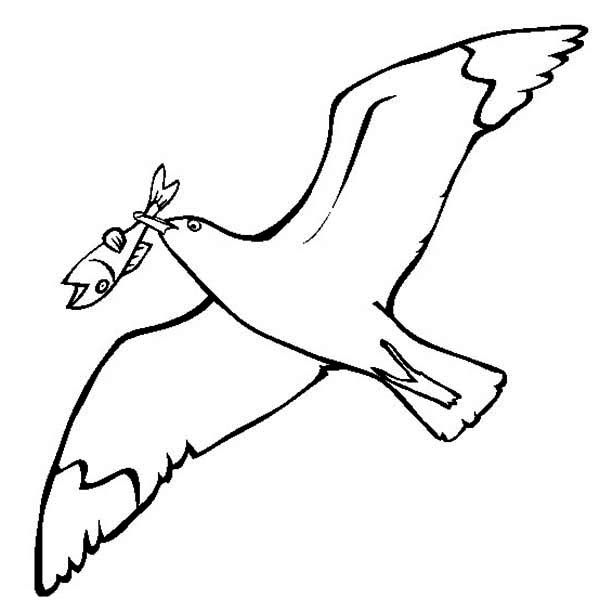 Seagull, : Seagull Eating Fish Coloring Page