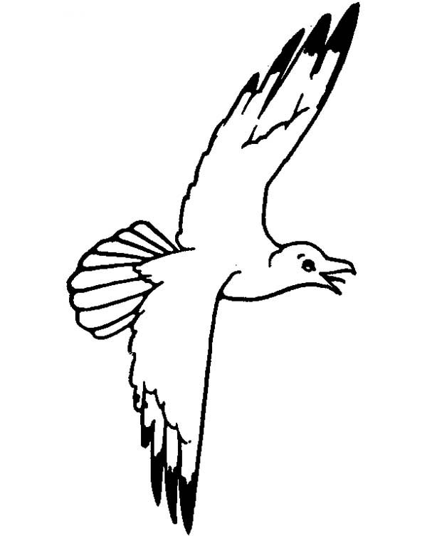 Seagull, : Seagull Sky Floating Coloring Page