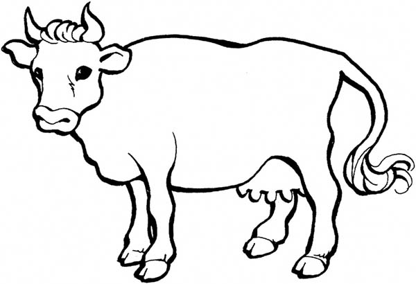 Cow, : Sharp Horn Milch Cow Coloring Page