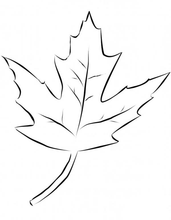 Maple Leaf, : Silver Maple Leaf Picture Coloring Page
