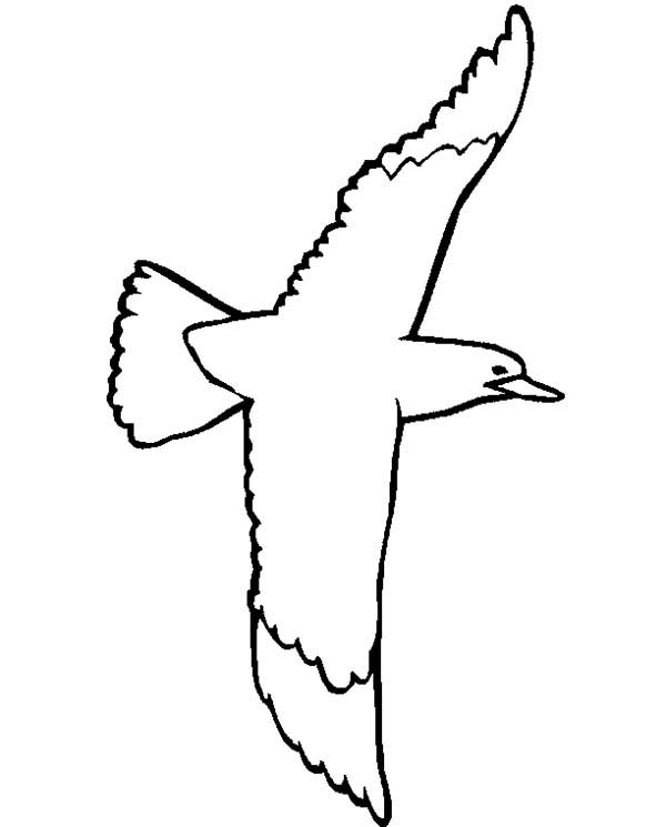 Seagull, : Swallow Tailed Seagull Coloring Page