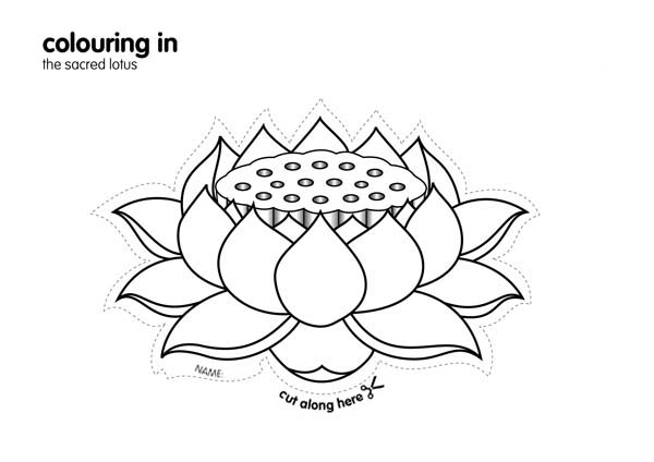 Lotus Flower, : The Sacred Lotus Flower Coloring Page