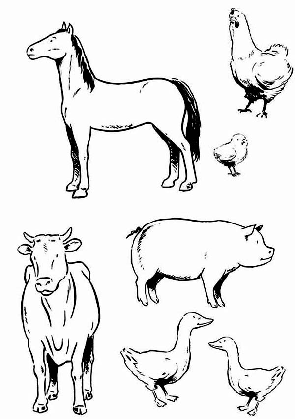 Farm Animal, : Various Type of Farm Animal Coloring Page