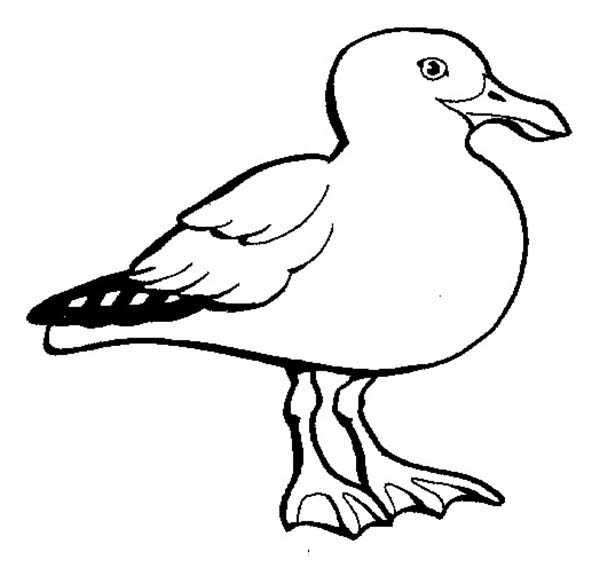 Seagull, : White Feather Seagull Coloring Page