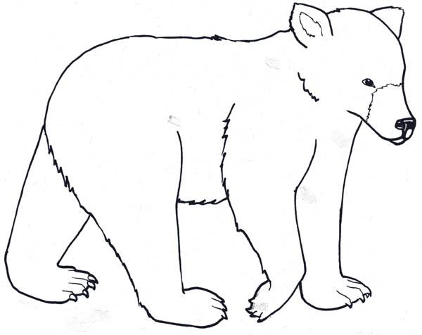 Polar Bear, : Awesome Polar Bear Coloring Page
