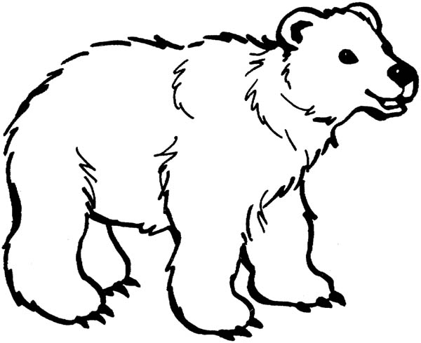 Polar Bear, : Fluffy Polar Bear Coloring Page