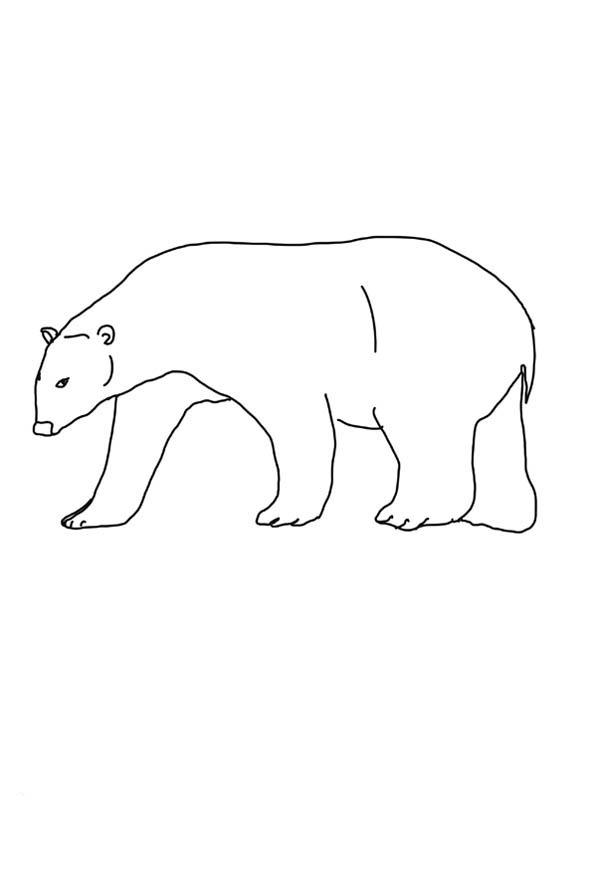 Polar Bear, : Polar Bear Coloring Page