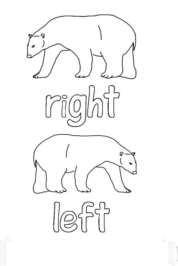Polar Bear, : Polar Bear Picture Coloring Page
