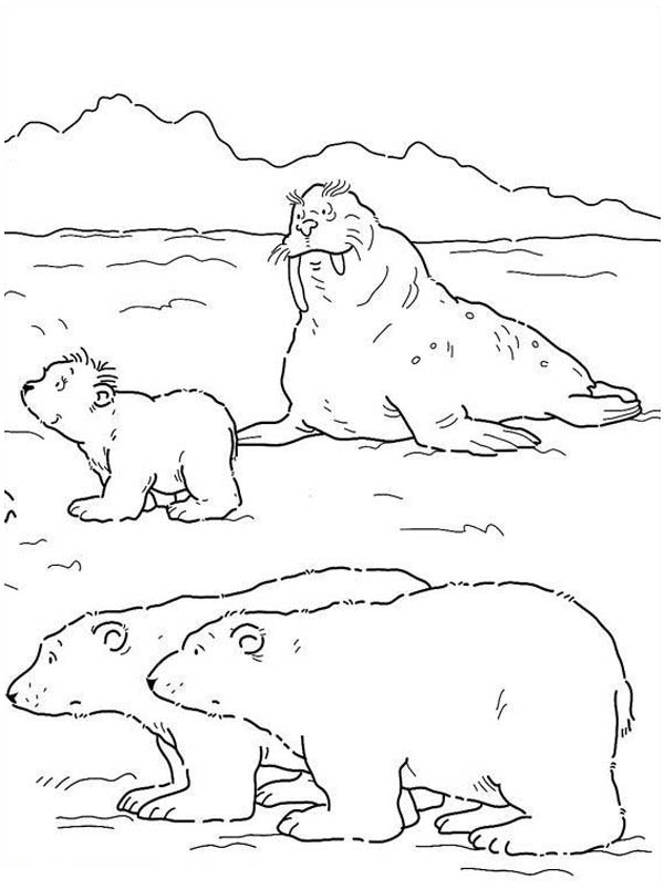 Polar Bear, : Polar Bear and Big Seagull Coloring Page