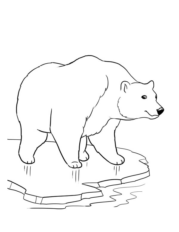 Polar Bear, : Polar Bear on Thick Ice Coloring Page