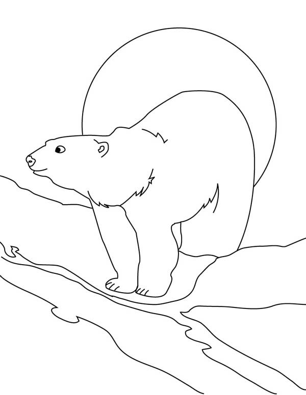 Polar Bear, : Wandering Around Polar Bear Coloring Page