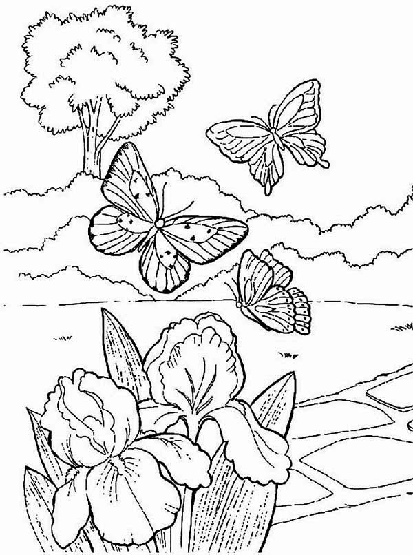 Spring, : Butterflies Looking for Spring Flower Coloring Page