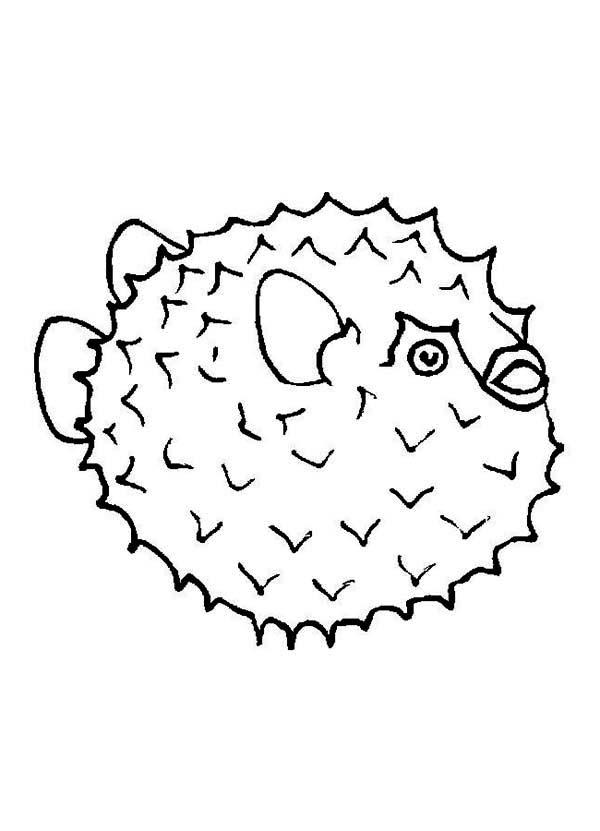 Puffer Fish, : Fugu Puffer Fish Coloring Page