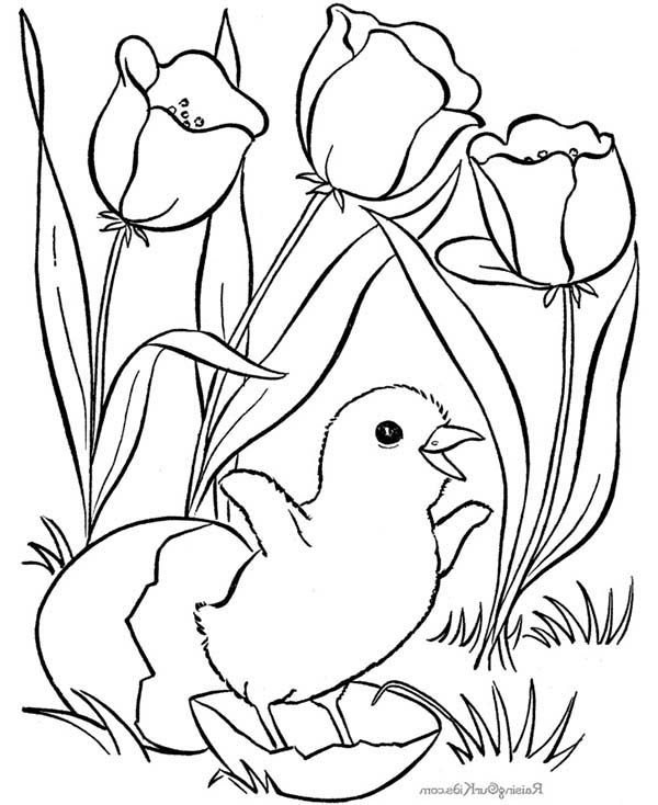 Spring, : Happy Chick in Spring Season Coloring Page