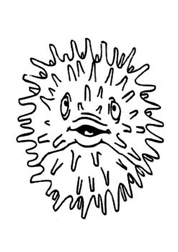Puffer Fish, : Laughing Puffer Fish Coloring Page