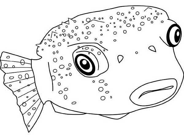 Puffer Fish, : Poisonous Puffer Fish Coloring Page