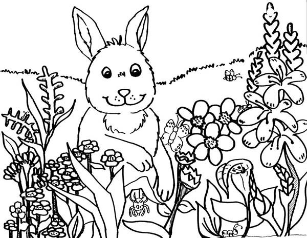 Spring, : Rabbit and Flowers in Spring Coloring Page