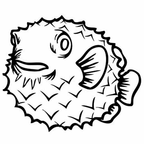 Puffer Fish, : Sugar Toads Puffer Fish Coloring Page