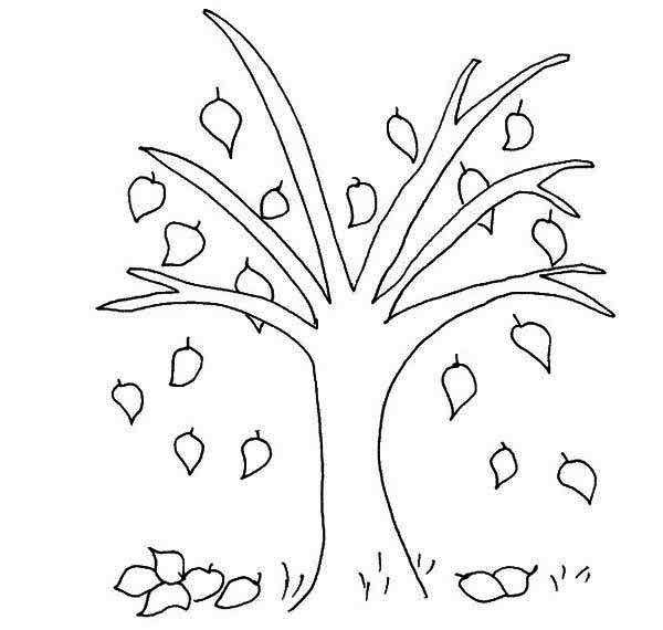 Autumn, : Beech Tree Autumn Leaf Coloring Page