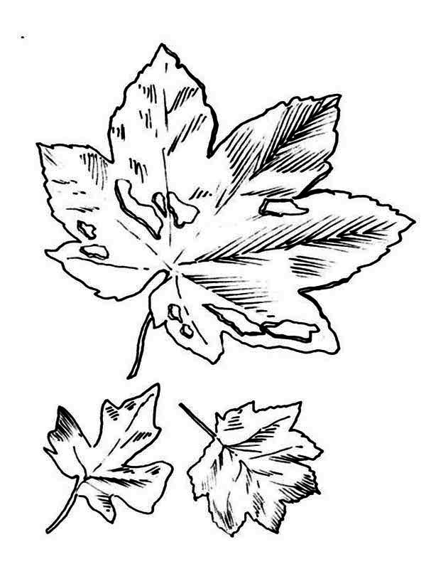 Autumn, : Dirty Autumn Leaf Coloring Page