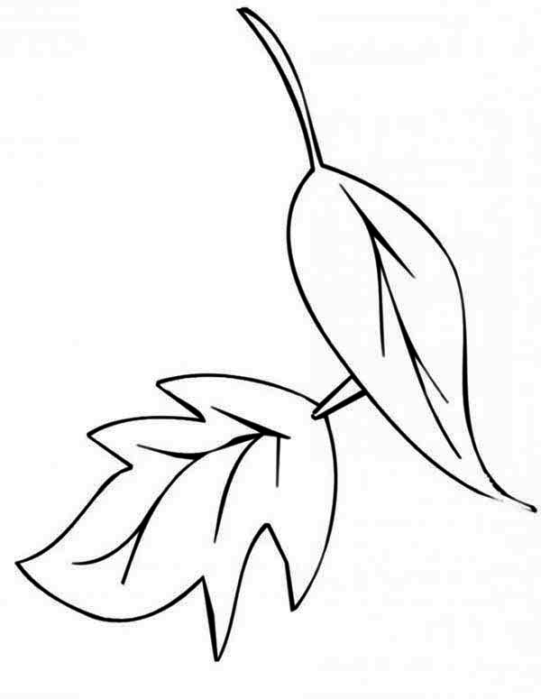 Autumn, : Dry Autumn Leaf Coloring Page