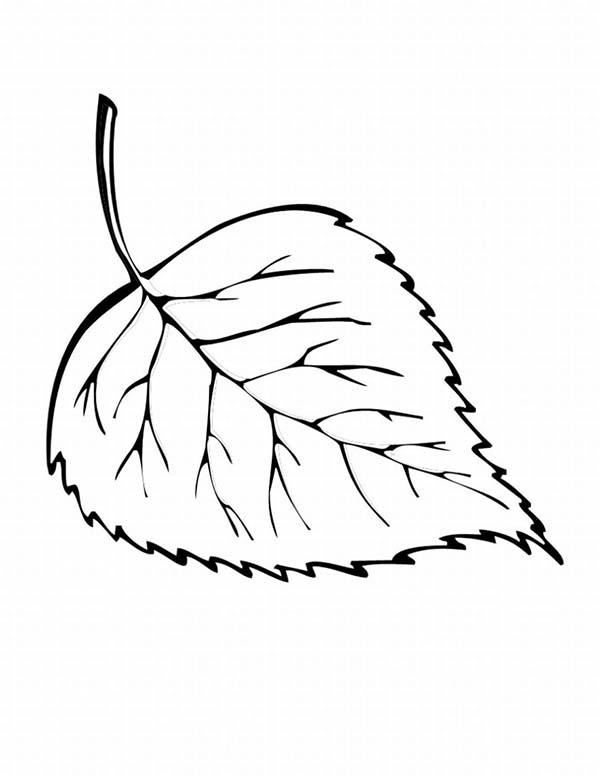 Autumn, : Hornbeam Autumn Leaf Coloring Page