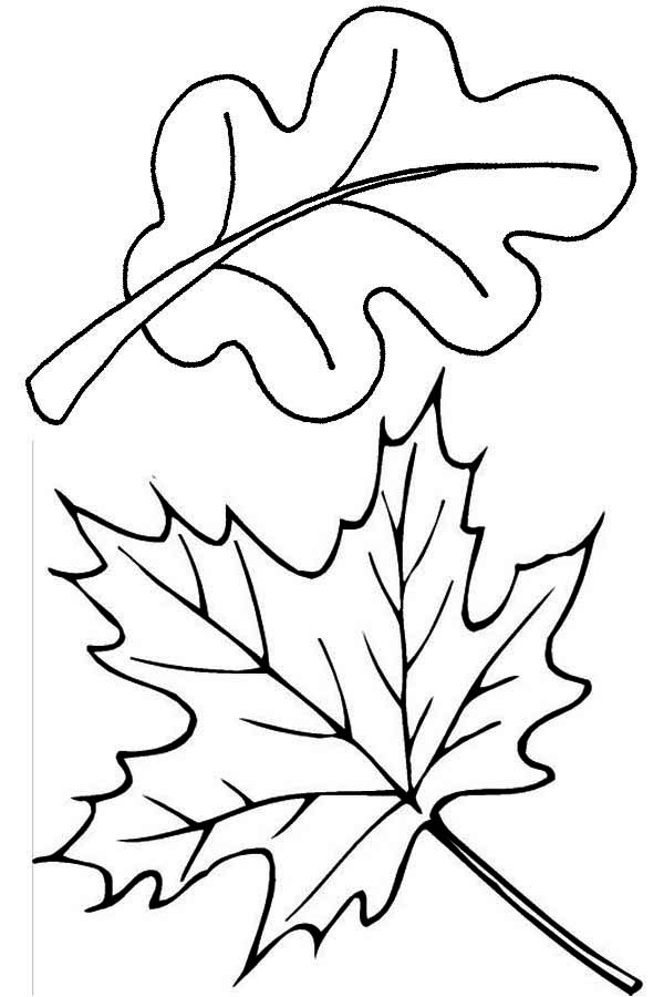 Autumn, : Maple and Oak Autumn Leaf Coloring Page