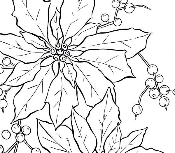 National Poinsettia Day, : A Bit of Poinsettia Fruit for National Poinsettia Day Coloring Page