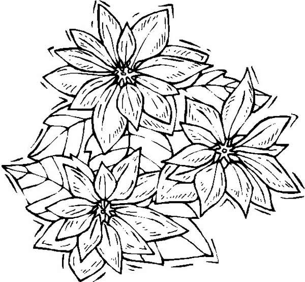 National Poinsettia Day, : Artistic Poinsettia Drawing for National Poinsettia Day Coloring Page