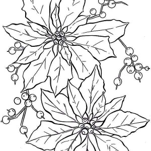 A Bit Of Poinsettia Fruit For National Poinsettia Day ...  A Bit Of Poinse...