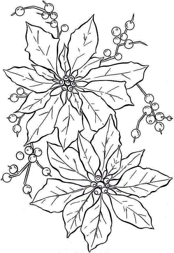 National Poinsettia Day, : Awesome Poinsettia Flower for National Poinsettia Day Coloring Page
