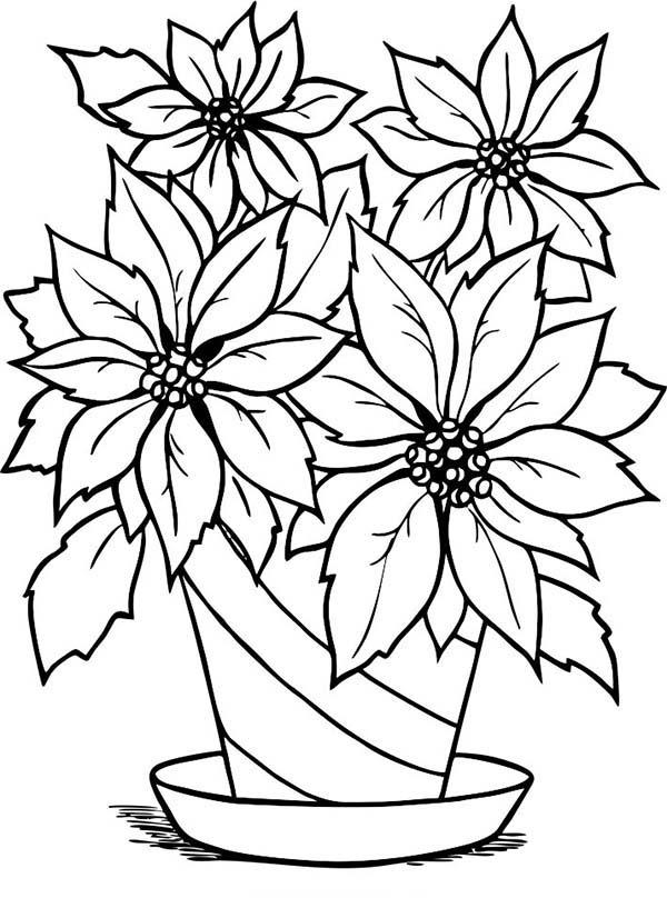 National Poinsettia Day, : Beautiful Poinsettia in Flowerpot for National Poinsettia Day Coloring Page