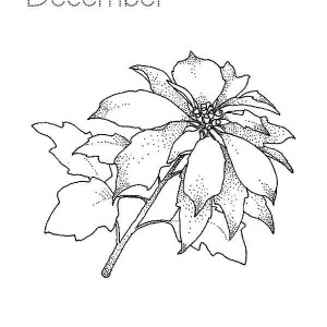 poinsettia coloring pages for kids - photo#22