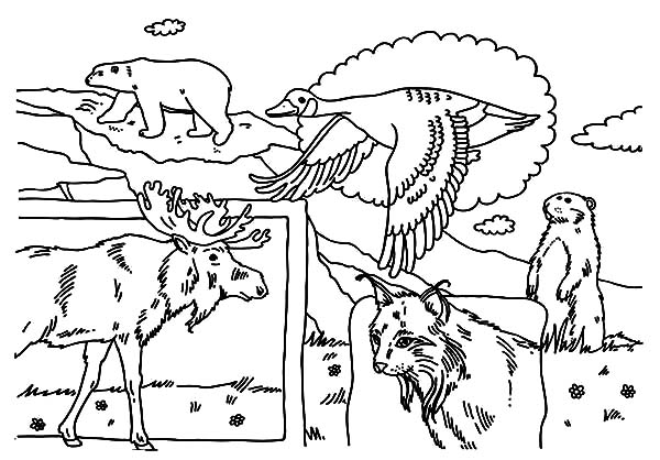 National Canada Day, : National Animals on National Canada Day Coloring Pages
