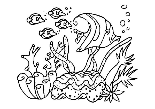 Coral Reef Fish, : A Group of Fish in Coral Reef Sea Coloring Pages