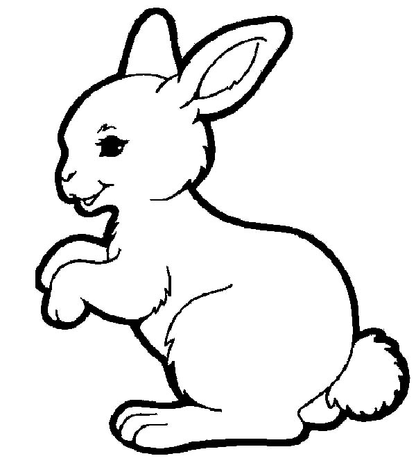 Hopping Bunny, : Adorable Hopping Bunny Coloring Pages