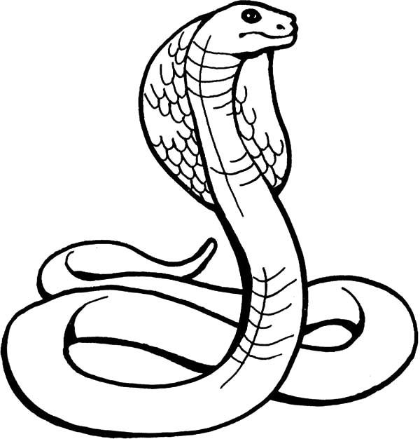 King Cobra, : Amazing Animal King Cobra Coloring Pages