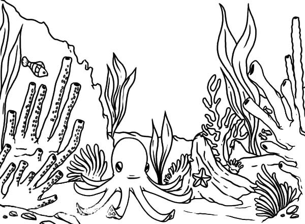 Coral Reef Fish, : An Octopus Waiting for Coral Reef Fish Coloring Pages