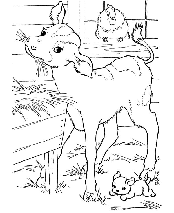 Cows, : Baby Cows Eat Breakfast Coloring Pages
