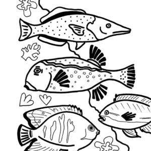 Coral Reef Fish Dolphin Coloring Pages : Kids Play Color