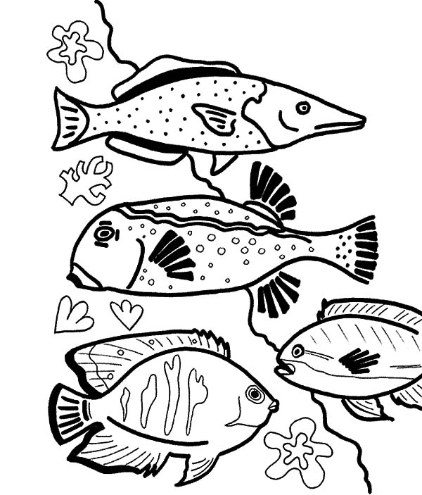Coral Reef Fish, : Beautiful Fish Coral Reef Coloring Pages