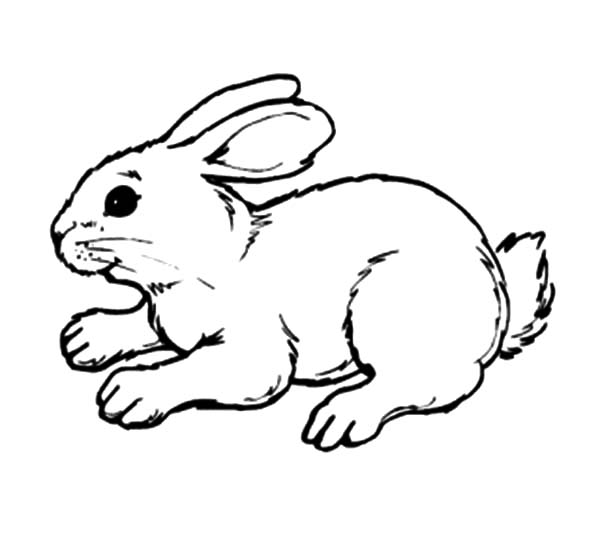 Hopping Bunny, : Bunny Tired Hopping Coloring Pages